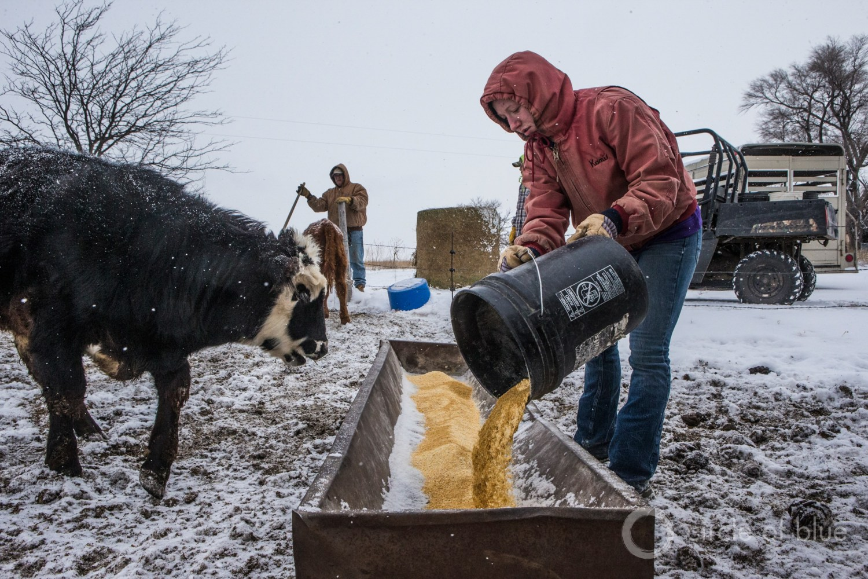 The Miller family doing daily chores near Rexford, Kansas. Photo © Brian Lehmann / Circle of Blue