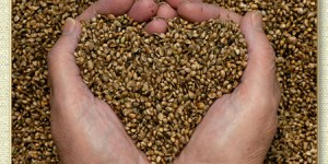 love, seeds, hope, hands holding seeds