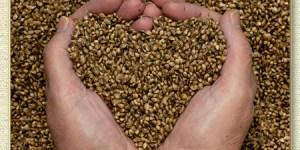 love, seeds, hope, hands holding seeds