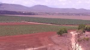 Mackay Brothers Banana Plantation Cape York Peninsula