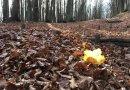 Proposte dalla Romagna: escursione in Campigna – il Sentiero del Granduca – 16 novembre 2019