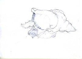 disegno-di-puro-contorno4