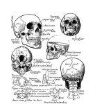 un manuale per disegnare anatomia da Victor Perard