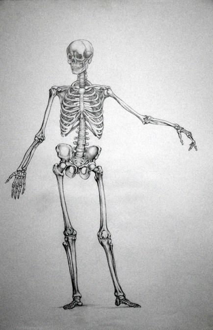 tavola anatomica - Bic cristal nera su cartoncino riciclato grigio