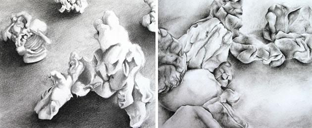 alcuni disegni a matita e carboncino realizzati usando popcorn come modello