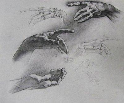 disegno anatomia mano