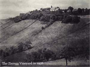 zieregg-vineyard-1956
