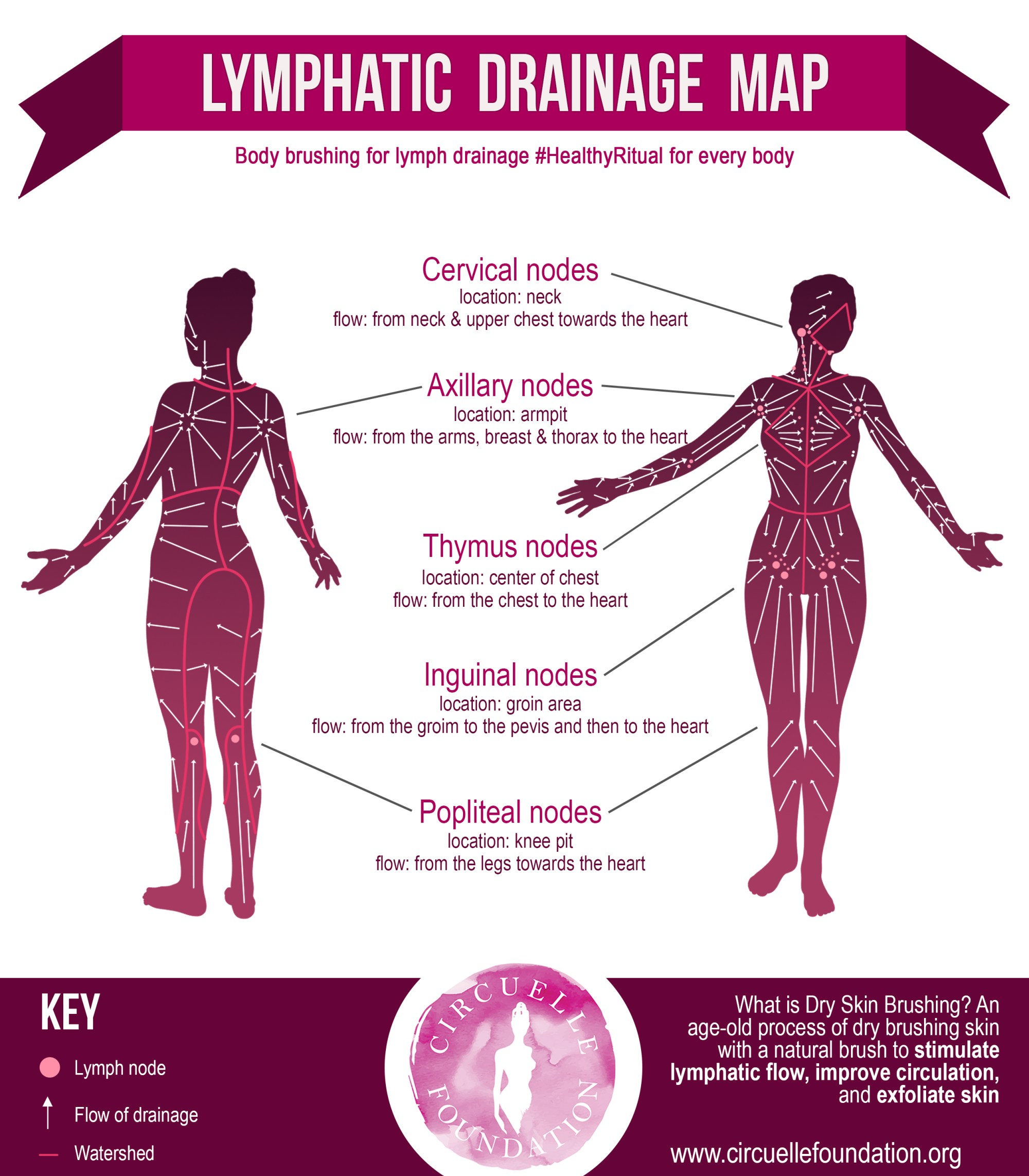 hight resolution of download lymph drainage map