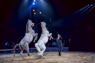 Liberty horses Circus Dictionary