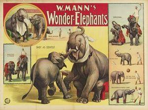 Pachyderm - Circus Dictionary