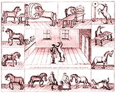 Cheval savant au XVIIIème siècle - cheval au Cirque