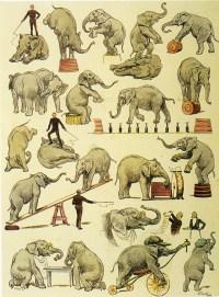 Eléphants de Lockart - Eléphants