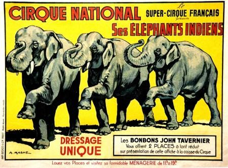 Cirque National - Amédée Ringenbach - les éléphants