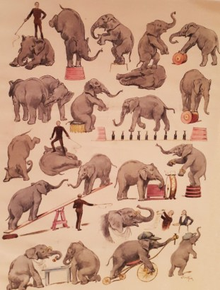 Sam Lockart et ses éléphants - exercices