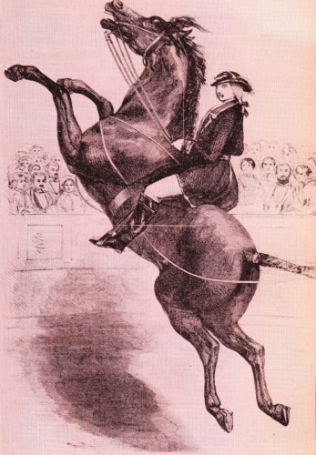 Henri Franconi junior - cheval