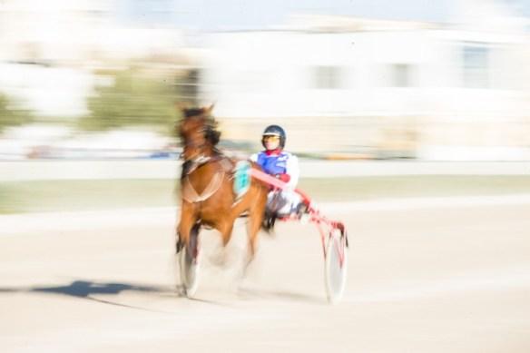Harness racing,Alan Falzon,Circus Malta,Valletta