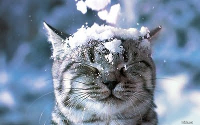 tél cica