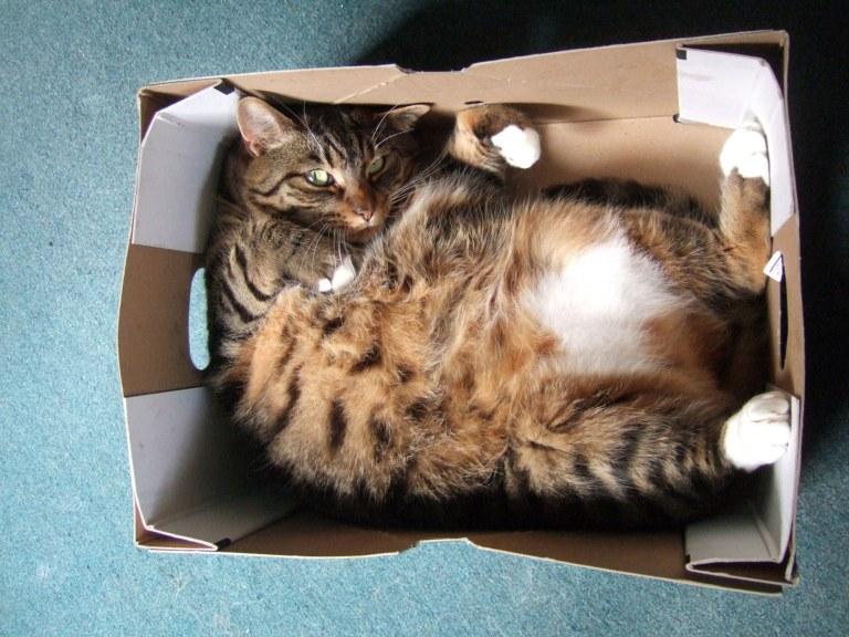 Macska kartondobozban