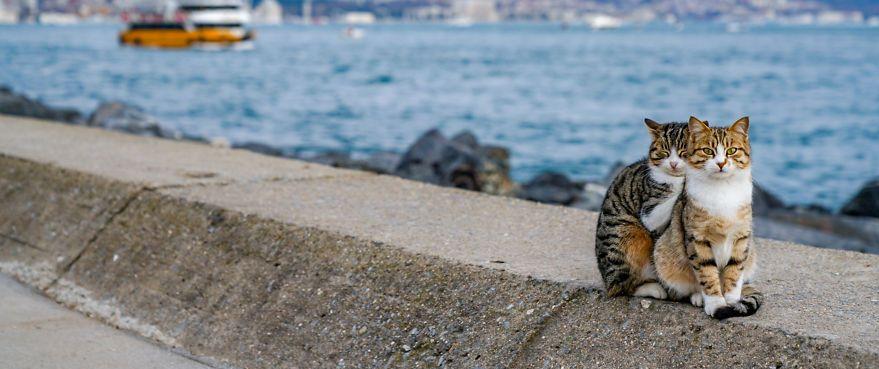 Isztambuli cicák