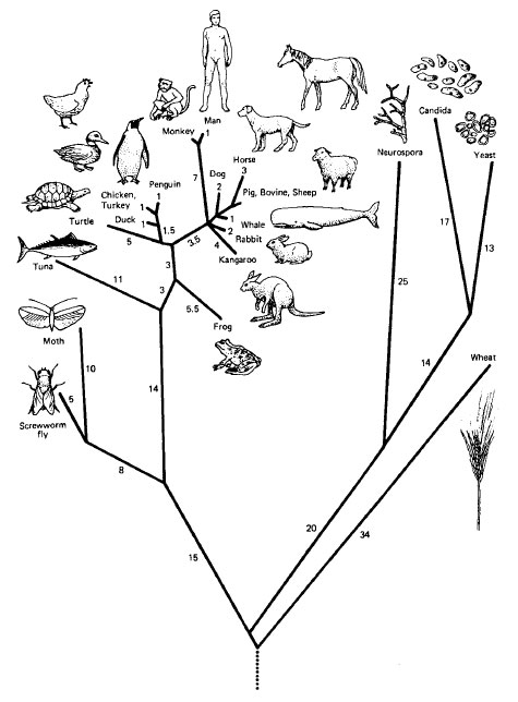 Phylogenetic Trees Are Also Called Weegy