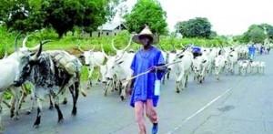 fulani-herdsmen-612x300-300x147