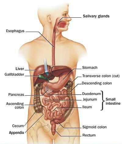 Visita specialistica gastroenterologica sardegna cagliari