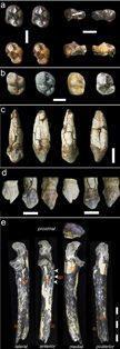 Early human assortment of fossil dental remains. PIC Roseleen Nzioka/ANA