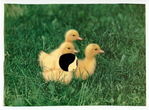 Duckies © Elizabeth Schoettle