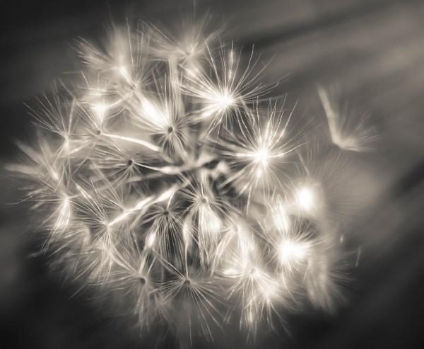 frantic light ©Robin Cohen