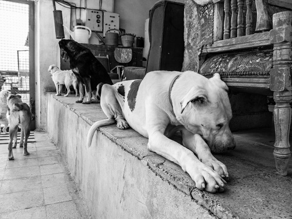 Piggy the blind dog ©Babak Gharaei