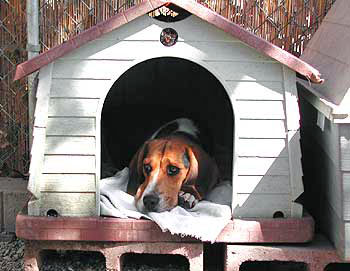 doghouse3.jpg