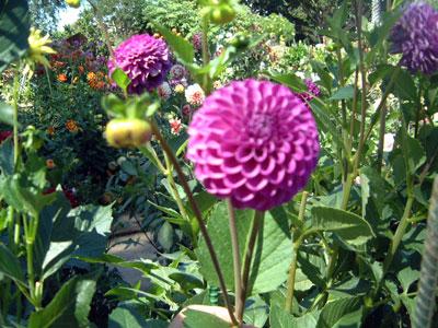 gardens8.jpg