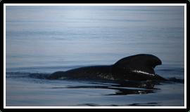 Whale FM