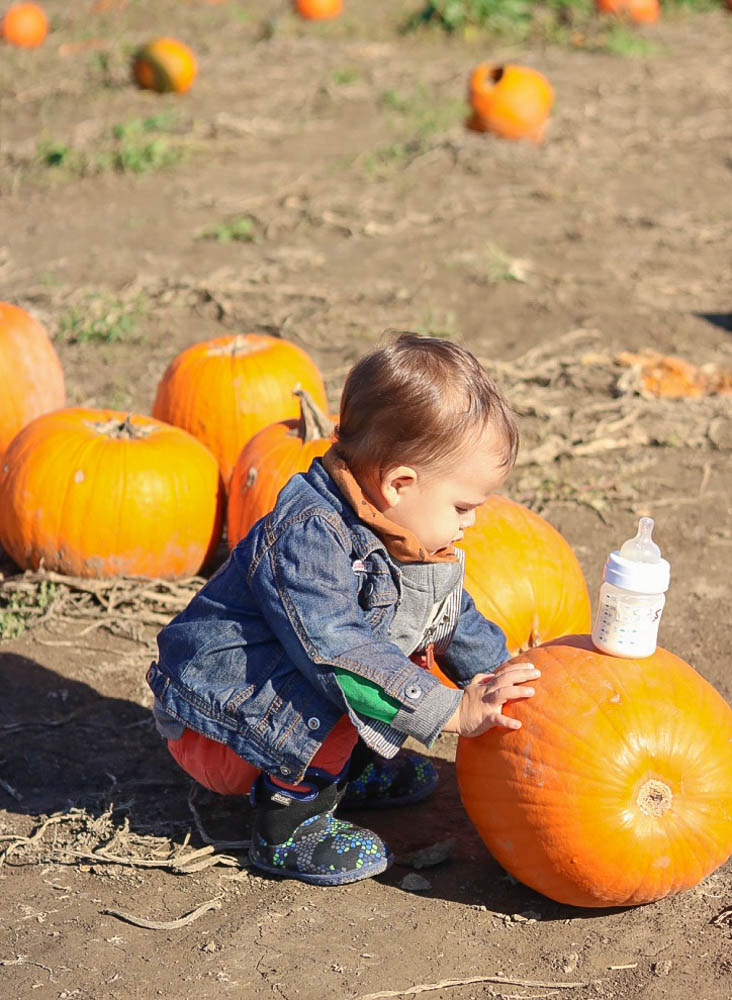 2017, fall fashion, mom style, casual style, pumpkin patch, family activity, orange, quebec, squash, toddler style, avent, baby bottle