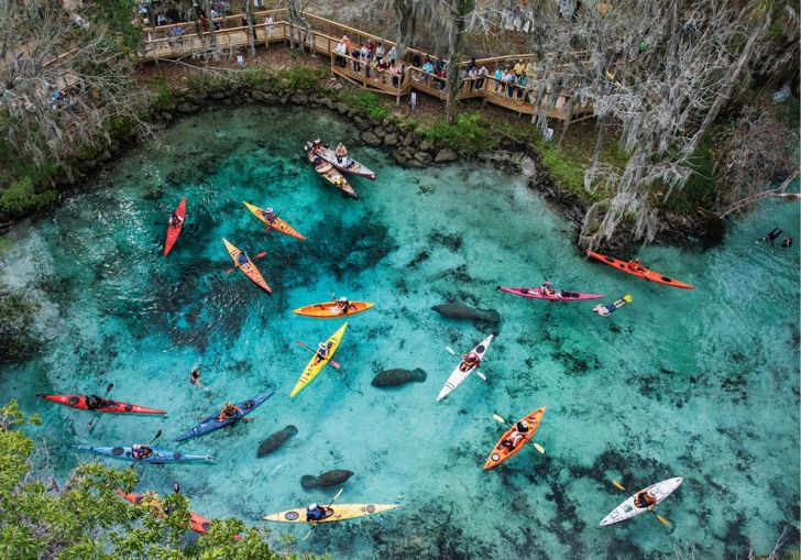 Best Springs In Florida For Swimming