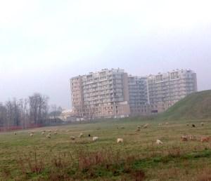 pecore_adriano
