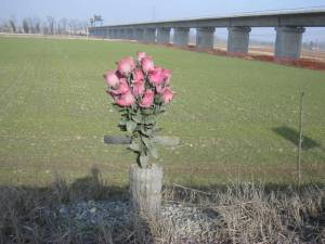 02_santhià-fiori-3