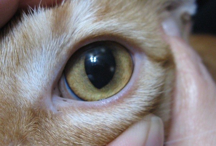 Brand New Spots In Cat S Eye What Could It Be Freddy