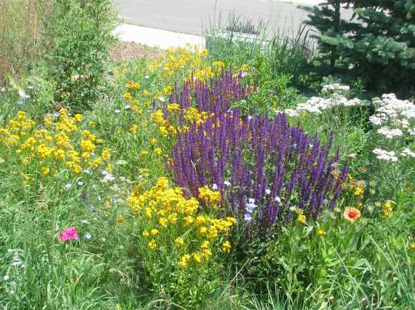 colorado landscaping - page