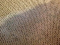 Moldy Carpet Cleaning | www.cintronbeveragegroup.com