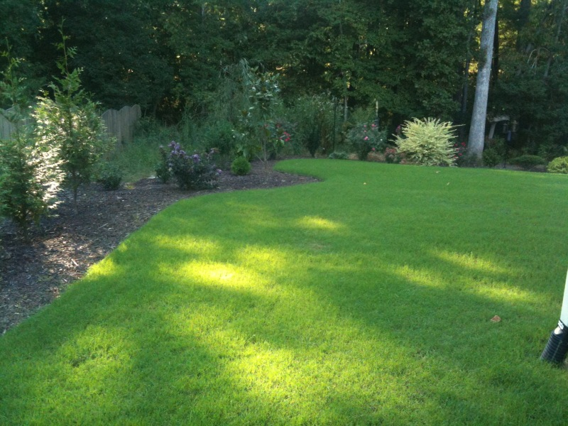 Rebel Grass Seed Southern Blend