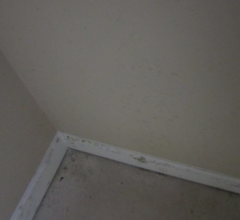 Black Mold Spots On Ceiling