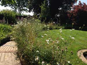 wildflower-border-for-lawn-