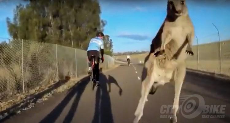 Cycliq Best of 2018 - Kangaroo!