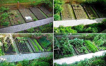 Urban Agriculture — City Farmer News