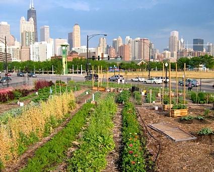 cityfarm.jpg