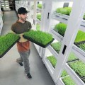 Living produce aisle grows produce in the store city farmer news