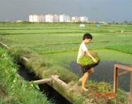 Kết quả hình ảnh cho FARMERS IN VIETNAM
