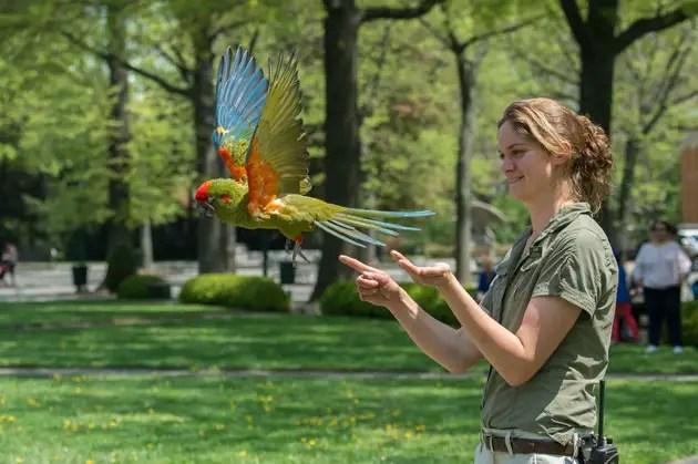 free flight bird show
