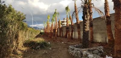 palme sul calopinace 1